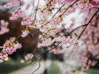 İlkbaharda Okunası 4 Kitap