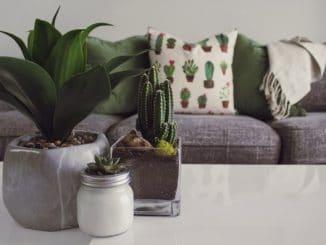Evinizin Havasını Temizleyen 8 Bitki